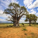 south-africa-kruger-national-park-baobab-tree-img9361-landscape-lg-rgb